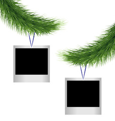 Two blank photoframes hanging on green pine branches isolated on