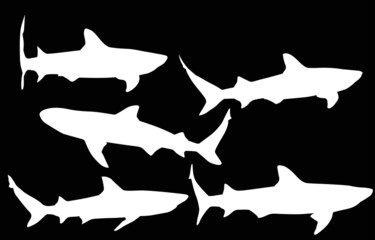 isolated five shark white silhouettes collection