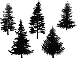 five fir silhouettes isolated on white