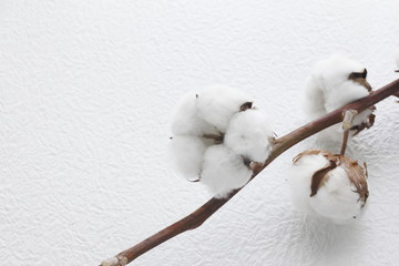 綿 生花 cotton