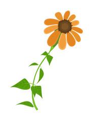 Orange Flower Plant