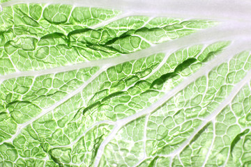 Green cabbage leaf background