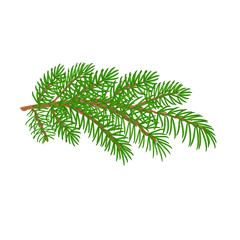 Branch spruce Christmas tree vector illustration