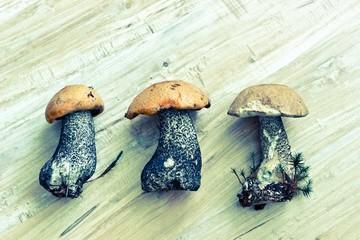 Vintage boletus mushrooms