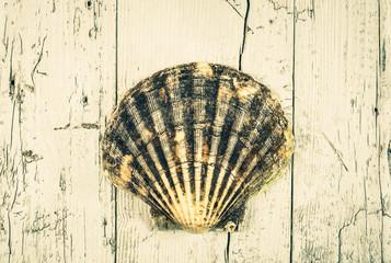 Seashell on old wood background, toned, vintage.
