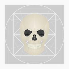 Golden ratio of the skull.