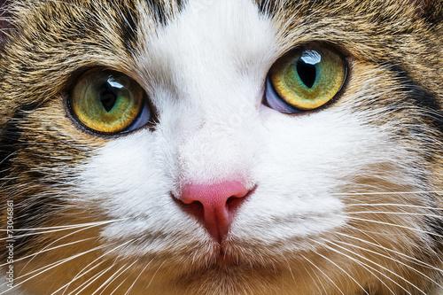 a cat portrait close up