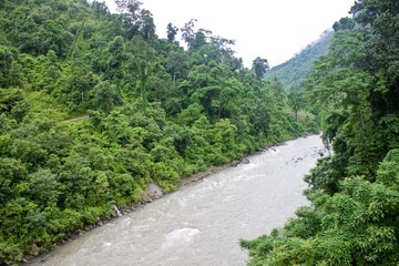 River in Sikkim jungle