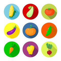 Vector set round icons with vegetables