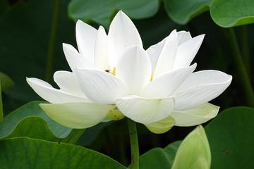 연꽃과 아름다운 식물
