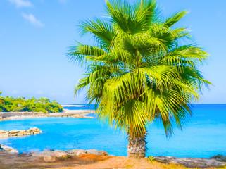palm sea shore