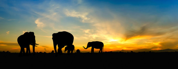 Silhouette elephant over sunset.