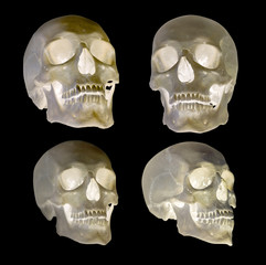 set of four human skull isolated on black