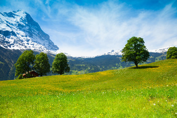 Wall Mural - Summer nature landscape near Alps