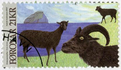 FAROE ISLANDS - 2012: shows Dimun Sheep