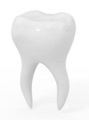 model of the ideal tooth