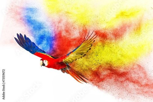 Wall mural Colourful flying parrot isolated on white