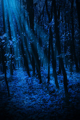 Wall Mural - Night forest