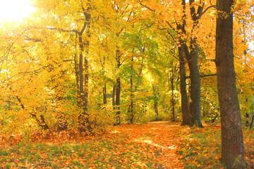 Autumn landscape, colorful foliage in the autumn park