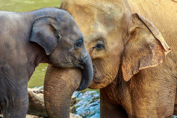 Photo sur Aluminium Elephant elephant and baby elephant