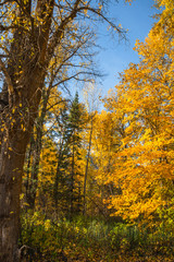 Fall Mountain Forest Landscape Vertical