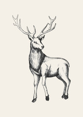 Sketch illustration of a reindeer