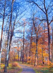 Sunlit Foliage Idyllic Nature