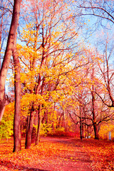 Garden Poster Natural Background Woods Landscape