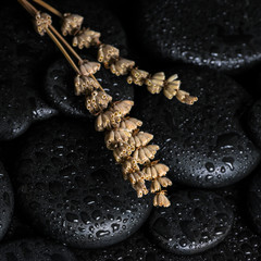Aromatic spa concept of dried lavenders on black zen basalt ston