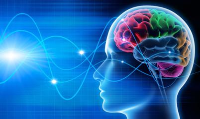 Gehirn - Schwingungen 1