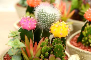 다양한 다육식물과 식물이미지 클로즈업