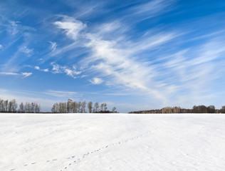 Fototapete - Fox trace on snowy field under windy sky