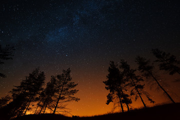 Trees on a background of the night starry sky