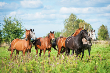 Wall Mural - Herd of horses on the pasture in autumn