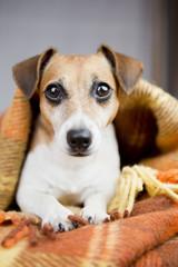 keep warm under a blanket comfortable dog