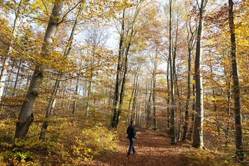 Spaziergang durch den herbstlichen Wald
