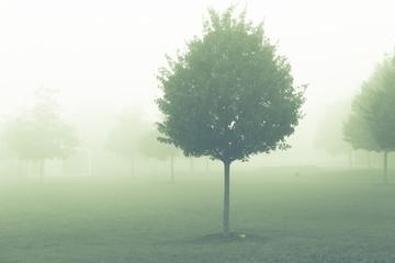 tree in misty morning
