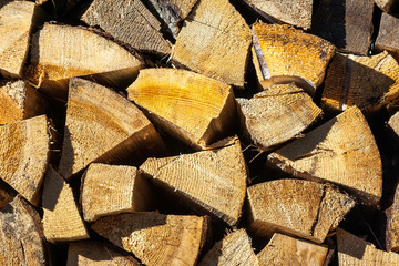 dry conifer firewood in sunlight