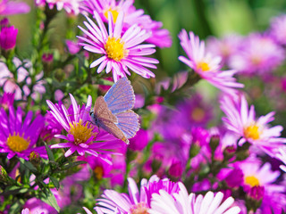butterfly and flowers 7