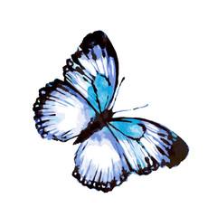 butterfly236