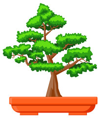 Bonsai plant on pot