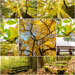 Herbst-Collage :)