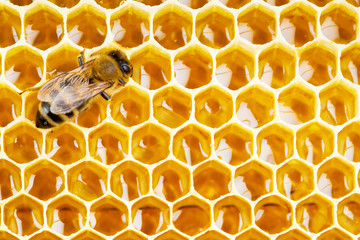 working bee on honeycomb cells