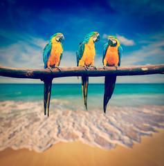 Fond de hotte en verre imprimé Perroquets three parrots (Blue-and-Yellow Macaw (Ara ararauna) also known a