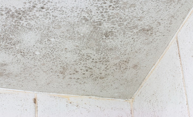 ceiling mould mildew