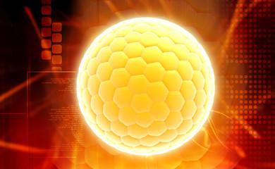Human ovum