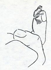 Monte Iberia eleuth (Eleutherodactylus iberia)