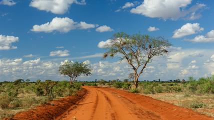Rote Erde in Tsavo, Kenia