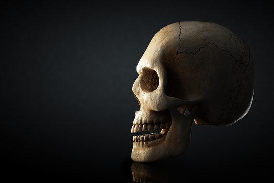 Human skull profile on dark background
