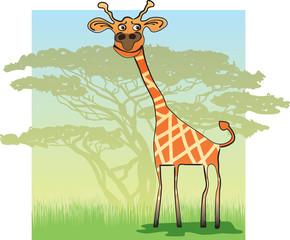 Funny Giraffe in Africa